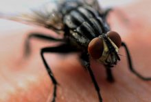 Photo of How to Prevent Houseflies from Infesting your Home