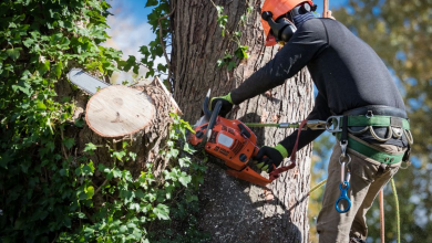 Photo of Dos And Don'ts When Hiring A Tree Service Provider