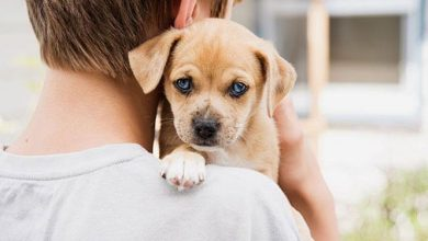 Photo of Here's a Quick Way to adopting a Pet