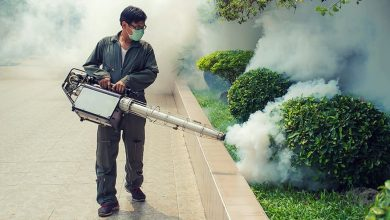 Photo of Why are pest control services a necessity?